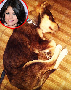 Selena Gomez's Pet Dog Baylor Nearly Died of Stones