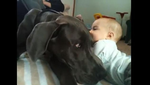 Great Dane Cuddles Baby In Heart Warming Viral Video