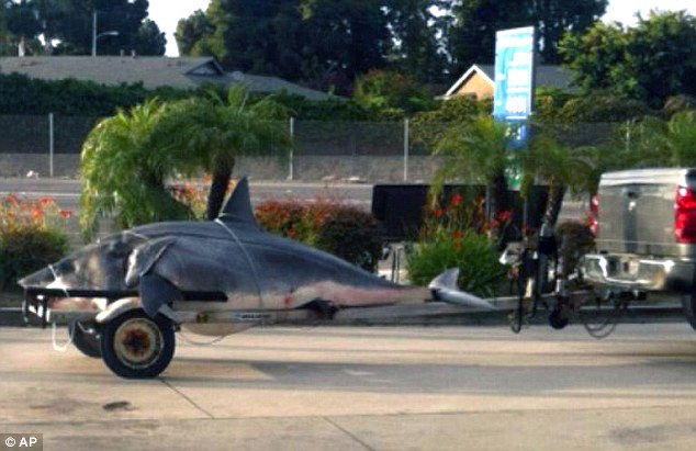 Beast on wheels: This photo shows the 1,323-pound mako shark on the back of a boat trailer being taken for an accurate weight reading to Gardena