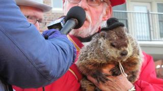 Groundhog Takes a Bite Out of Mayor