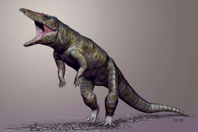 The Carnufex carolinensis, illustrated in this artist's rendering, is believed to have measured 9 feet long.