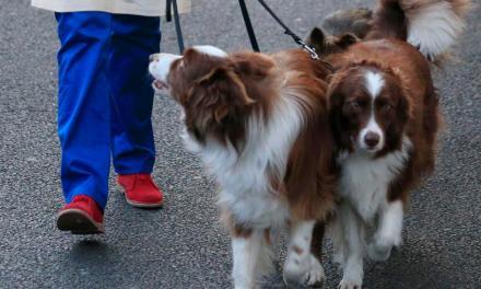 Doggie Double Uproar:  Doggie Double Stirs Uproar
