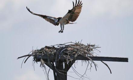 Birds abandon eggs, biologists baffled (PHOTO)