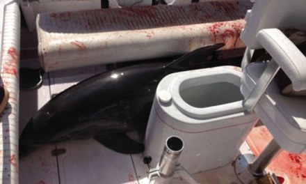 dolphin jumps into boat, Woman Injured (PHOTO)