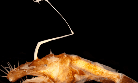 Scary-looking deep-sea fish found, has it's own fishing pole (PHOTO)