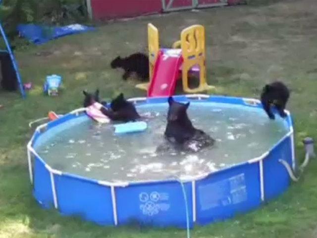 bears in new jersey pool