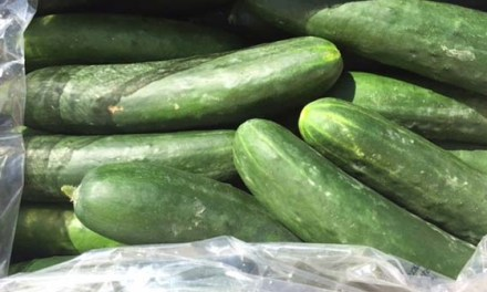Cucumber Recall:   1 Death, 300 reports of Salmonella Poisoning