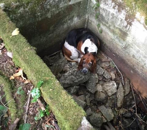 Loyal Dog Stays By Trapped Friend's Side For A Week Until Help Arrives