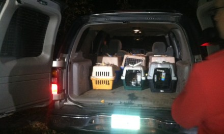 60 cats Removed From Connecticut home (PHOTO)
