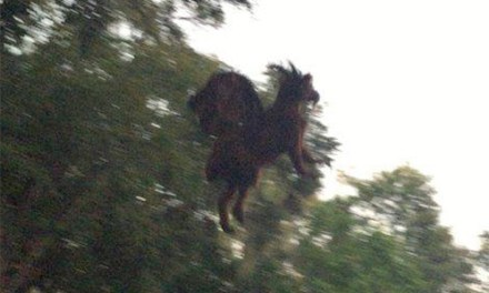 Jersey Devil sighting:  Video Proof Of Creature? (VIDEO)
