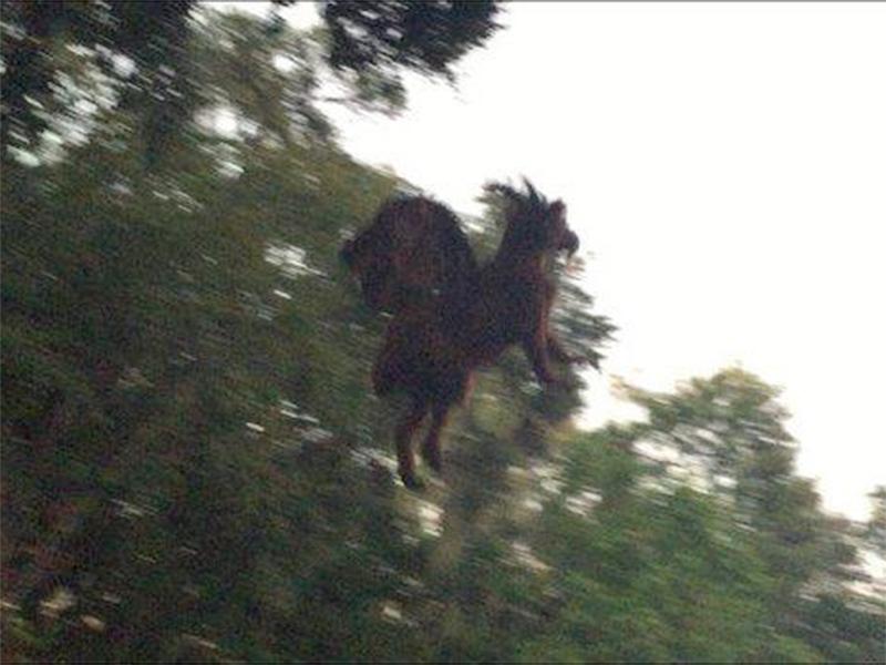 Jersey Devil sighting