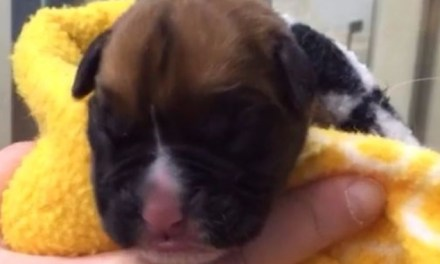 Cloned Puppy: couple celebrate birth of cloned puppy (VIDEO)
