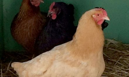Man leaves chickens at Oregon Department of Revenue Office