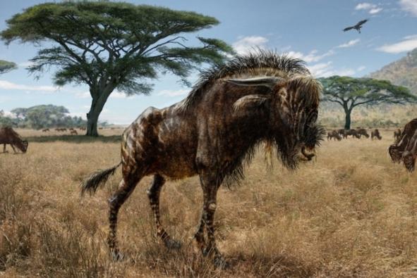Ancient wildebeest Dino-like Ancient Wildebeest (PHOTO)