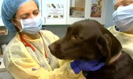 dog flu now in 26 states UPDATE