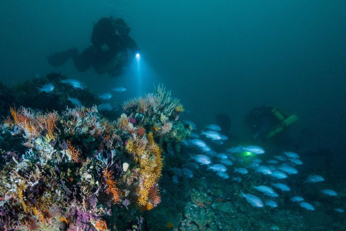 Twelve Apostles:   Newly Discovered Stacks Could Boost Number To 17