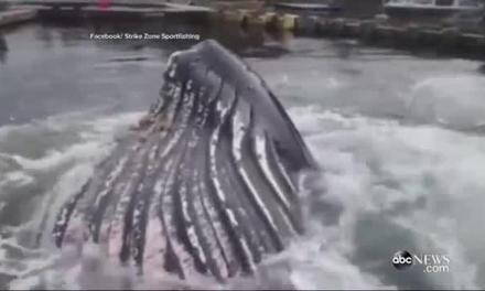 WATCH Humpback whale Attempts to Dock At  Marina –  WATCH