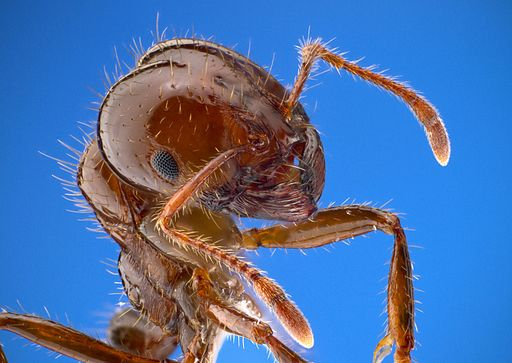 [Photo by Insects Unlocked|Wikimedia Commons |CC0]