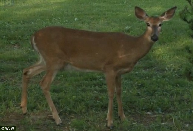 Ohio deer attacks woman 2