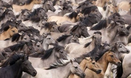 BLM Says 45,000 Wild Horses Need To Be Killed