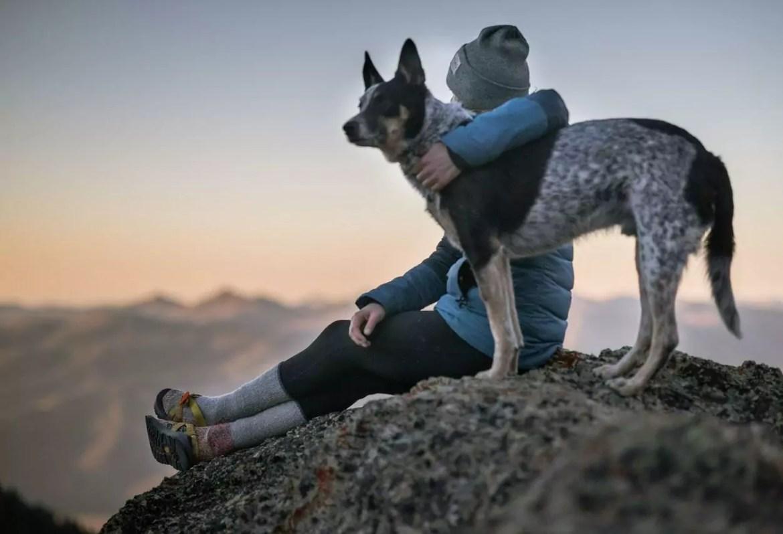 cães são os companheiros mais antigos