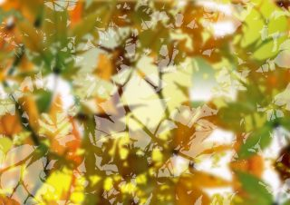 Spring – An off the shelf design (Limited Rights Available) – Photoshop collage of maple leaves and spring shoots