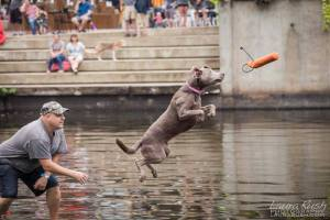 Dock Diving Dogs - Lake Anne