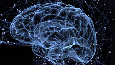 Photo of باحثون يكتشفون تشابهًا مخيفًا بين دماغ الإنسان والذكاء الاصطناعى