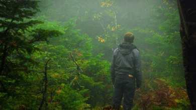 Photo of استخدام الذكاء الاصطناعي يساعد على العثور على الأشخاص المفقودين في الغابة