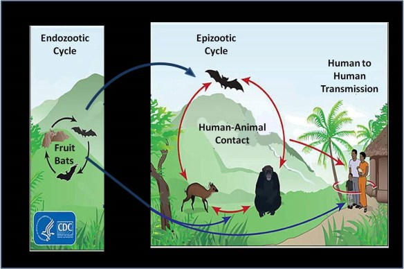 endozootic-cycle