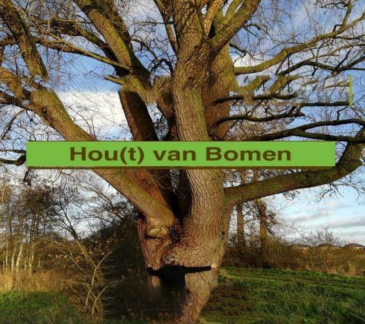 Museum Wierdenland opent met Hou(t) van Bomen!