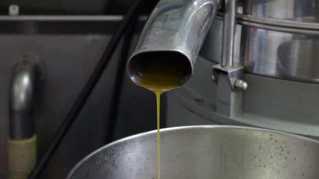 L'huile d'olive De Provence extra vierge juste à la sortie du pressoir.
