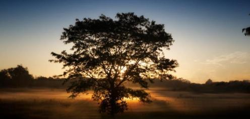 The sun breaks through the morning fog along the fields