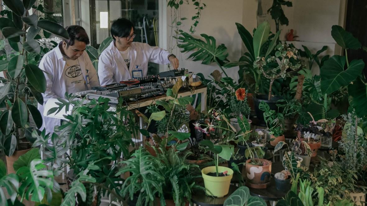 musik yang bagus untuk tanaman