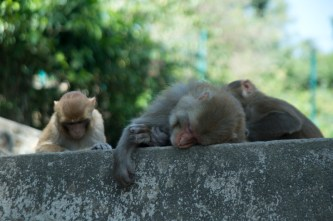 Lots of monkeys along the staircase