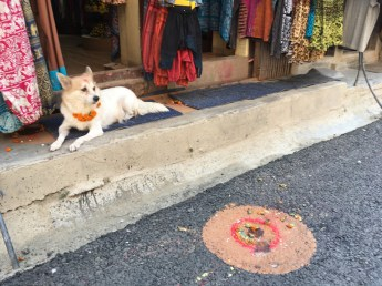 Dogs are worshipped and honored on the second day of Tihar.