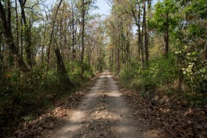 Bardia National Park [Jungle Walk]