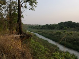 Waiting for tiger near the river bank