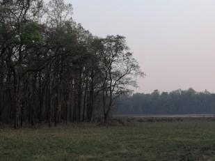 Bardia National Park [Jeep Safari]