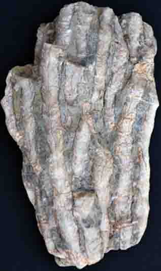 Kolonievormend koraal uit het Midden-Devoon van de Eifel (Duitsland; hoogte 13 cm).
