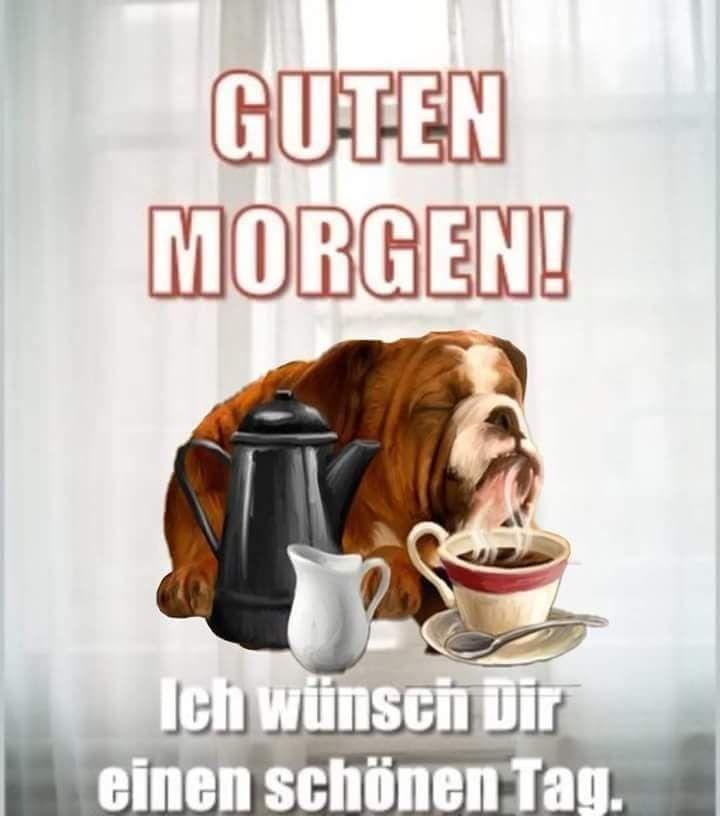 Guten Morgen Lustig Kostenlos Bilder Und Spruche Fur Whatsapp