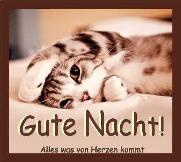 Gute Nacht Spruche Lustig Facebook Bilder Und Spruche Fur