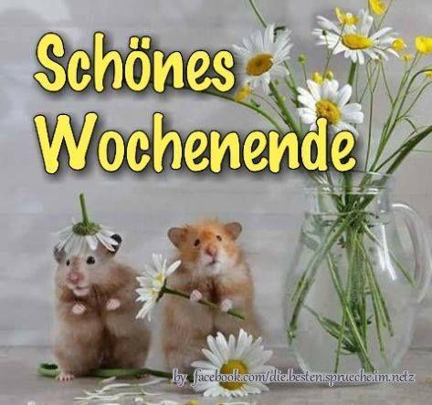 Guten Morgen Schones Wochenende Bilder Bilder Und Spruche Fur