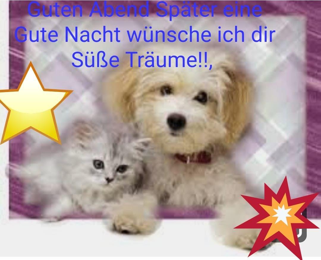 Gute Nacht Bilder Fur Whatsapp 24 Romantische Und Lustige Bilder