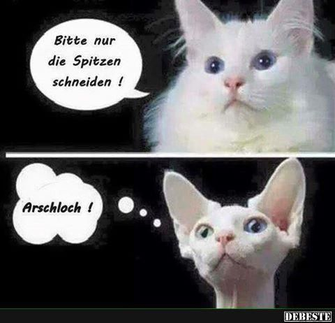 Danke Geburtstag Bilder Und Spruche Fur Whatsapp Und Facebook
