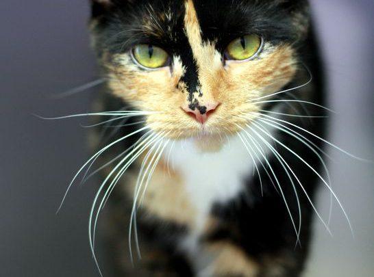 Funniest Lovely Cats Dogs Lustige Tieren Katzen Hunde