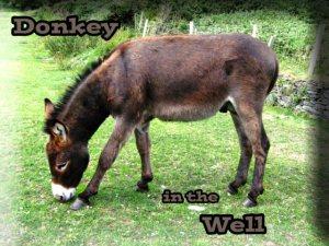 donkey_edited-1-1