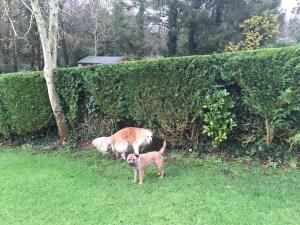 Flossie and Charlie under surveillance