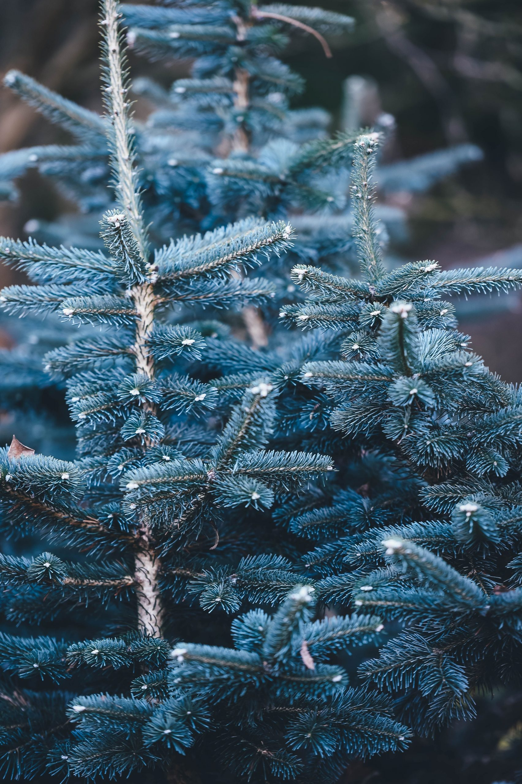 What Planting a Blue Spruce Taught Me About Life