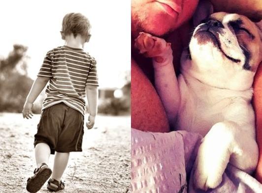 comparatii intre copil si animal